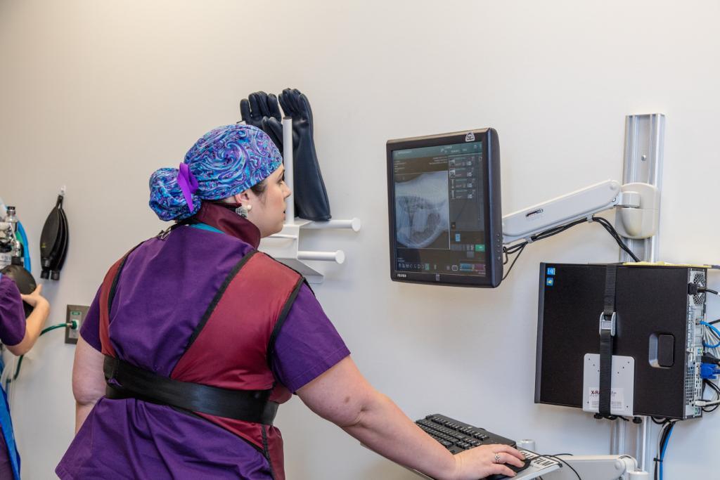 Lindsey reviewing radiographs