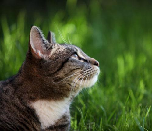 featured-cat-tabby