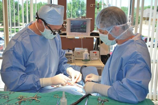 Dallas vet doctors in surgery