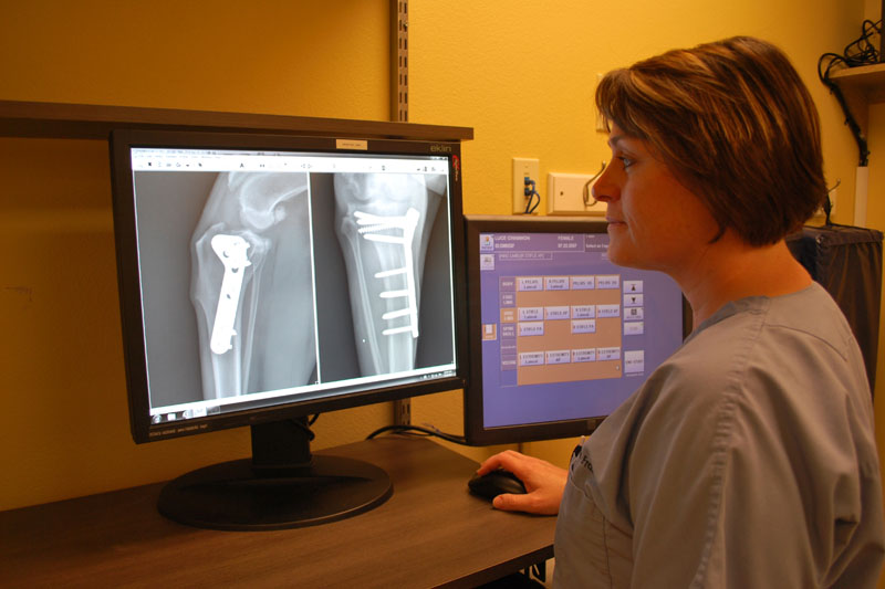 Dr. Franks reviews her TPLO recheck radiographs