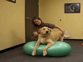 North Texas Animal Rehabilitation